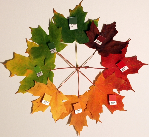 Autumn_leaves_(pantone)_crop